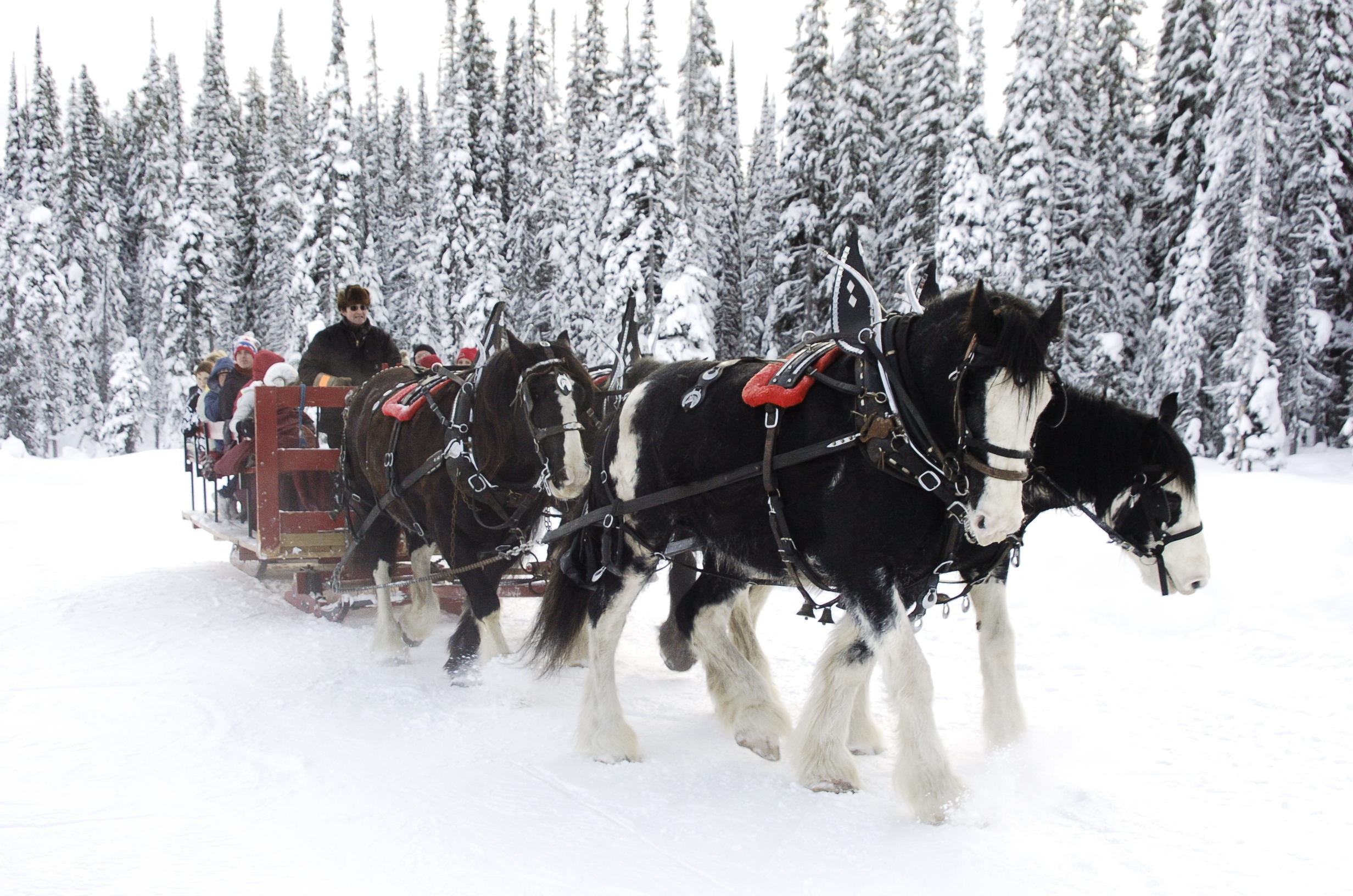 Horse Drawn Dining Tours