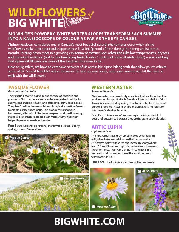 Wildflowers guide