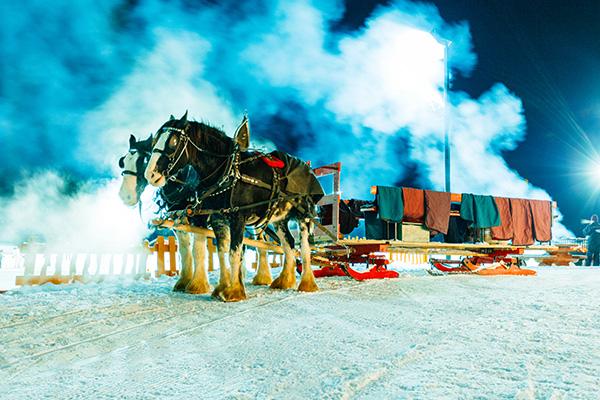 horse sleigh